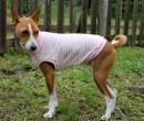 クールボーダーTシャツ(ピンク)